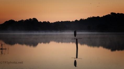 Heron At Dawn - click to enlarge