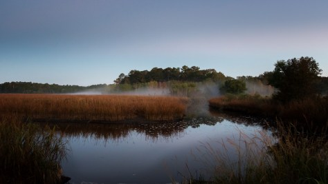 Marsh, Getting Light But Foggy - click to enlarge