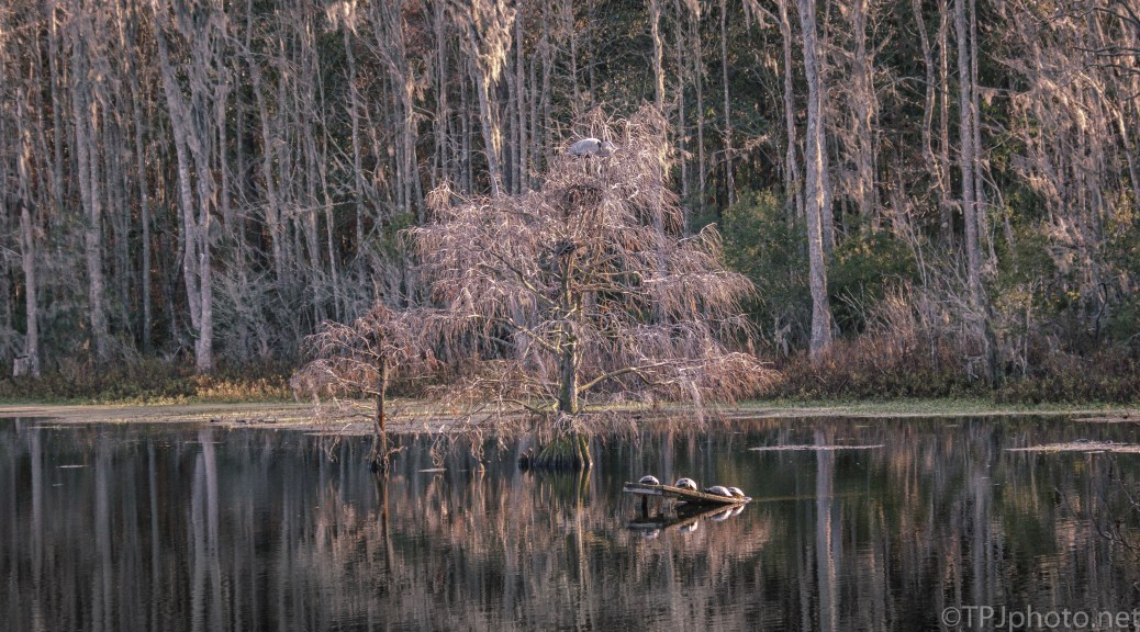 View Of A Swamp - click to enlarge