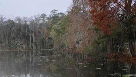 Wet Morning At A Swamp - click to enlarge
