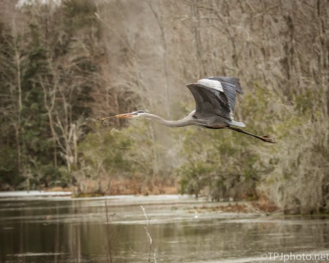 A Different Type Of Light, Heron - click to enlarge