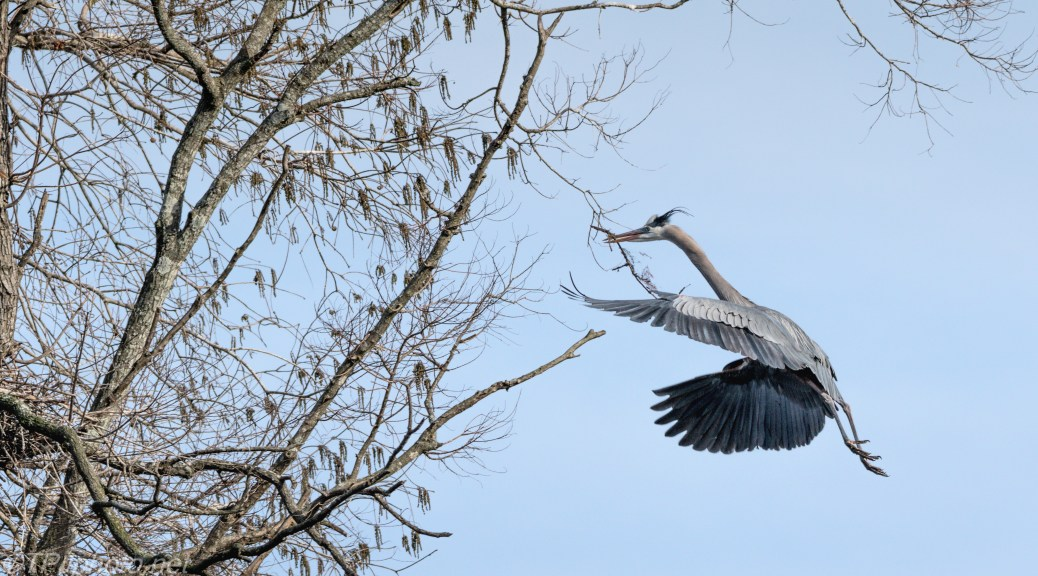 Heron Posing As A Dragon - click to enlarge