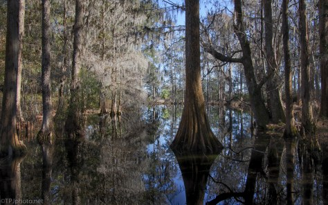 Clutter And Swamp Reflections - click to enlarge