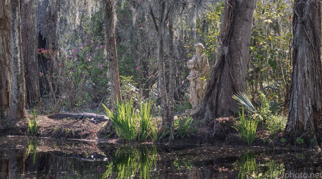 Going Back To Nature, Alligator - click to enlarge