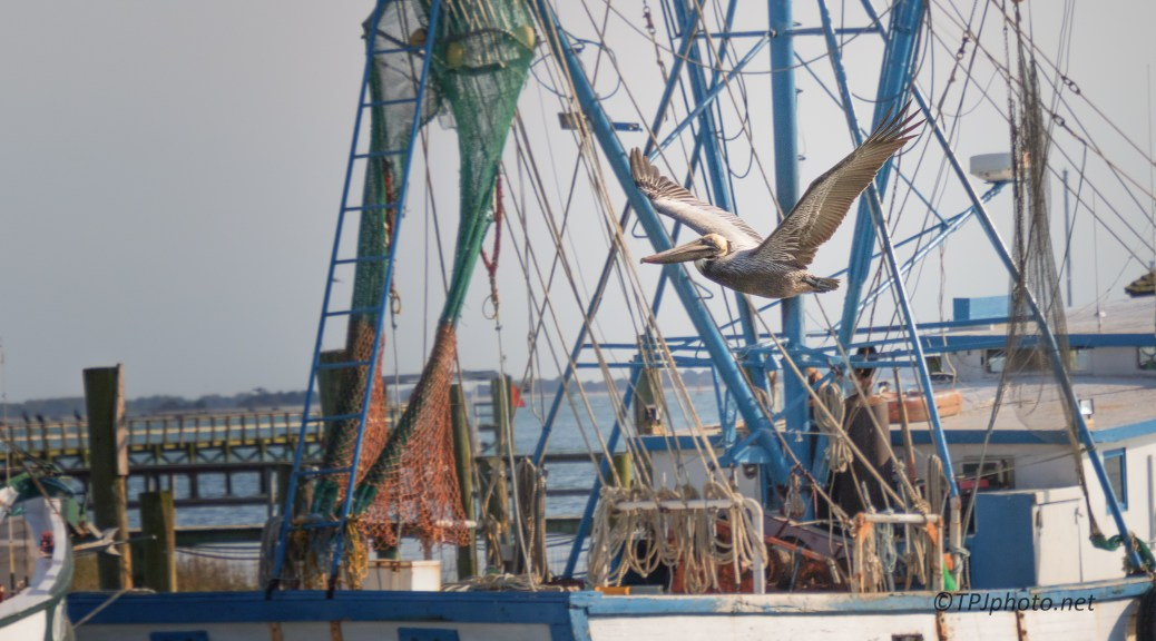 Shrimpers - click to enlarge