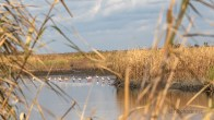 What I saw, South Carolina Marshlands