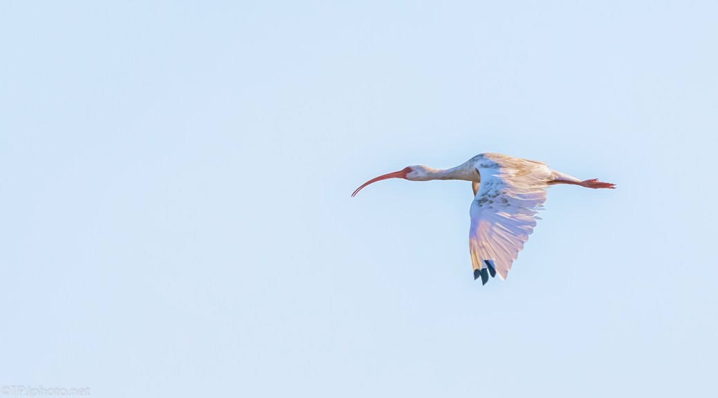 Now This One Was Fast, Ibis - click to enlarge