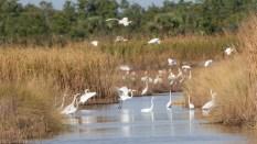 Moving By, Marsh Flocks