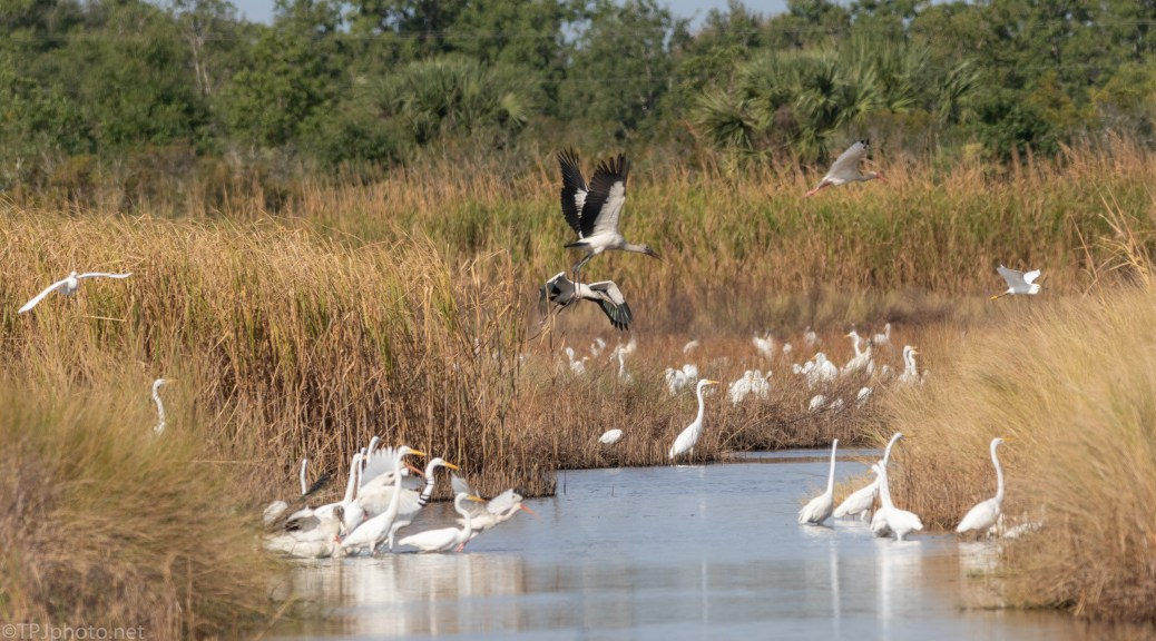 Moving By, Marsh Flocks - click to enlarge