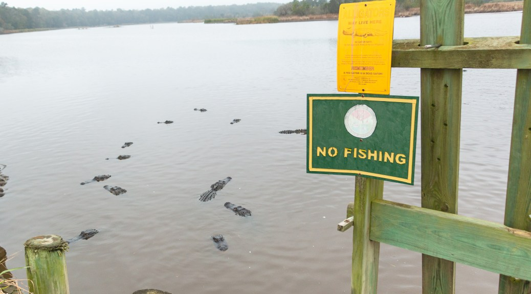 There 'May' Be Alligators - click to enlarge