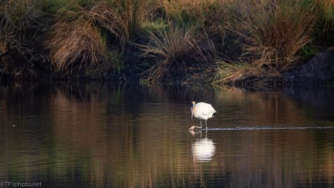 Wood Stork Landscape - click to enlarge