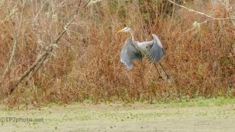 Busy Photograph, And Heron - click to enlarge