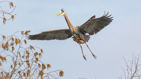 In The Flight Path, Heron - click to enlarge