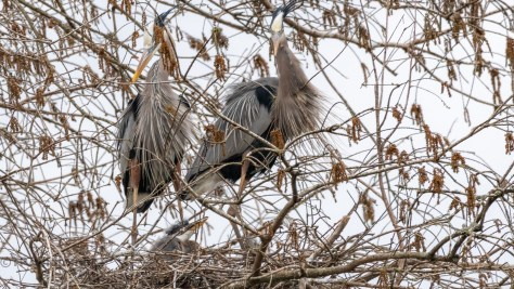 The Big Reveal, Heron - click to enlarge