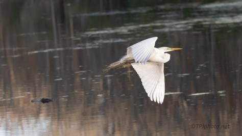 Why I Shoot Wide, Egret