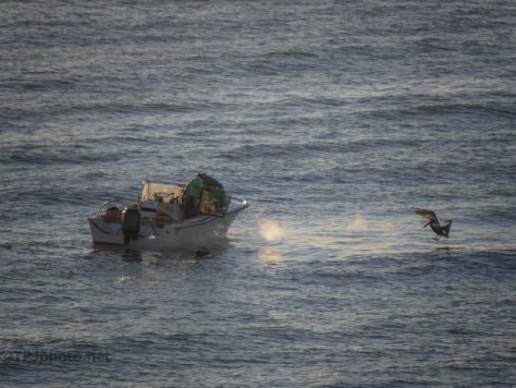 Setting A Mornings Crab Traps