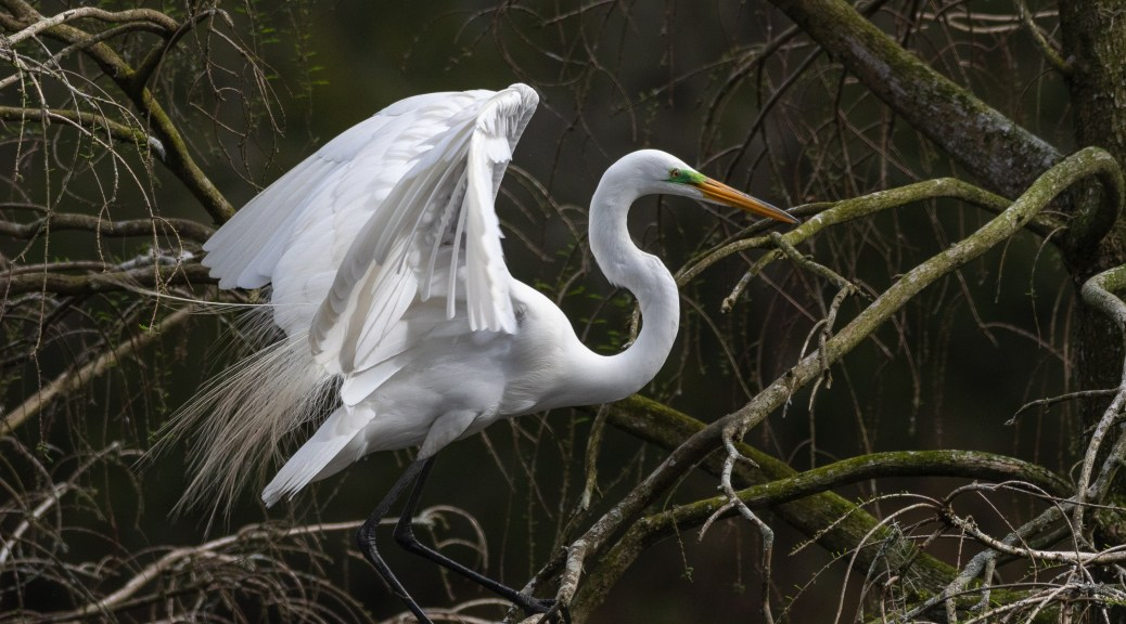 Caught At The Right Moment, Egret
