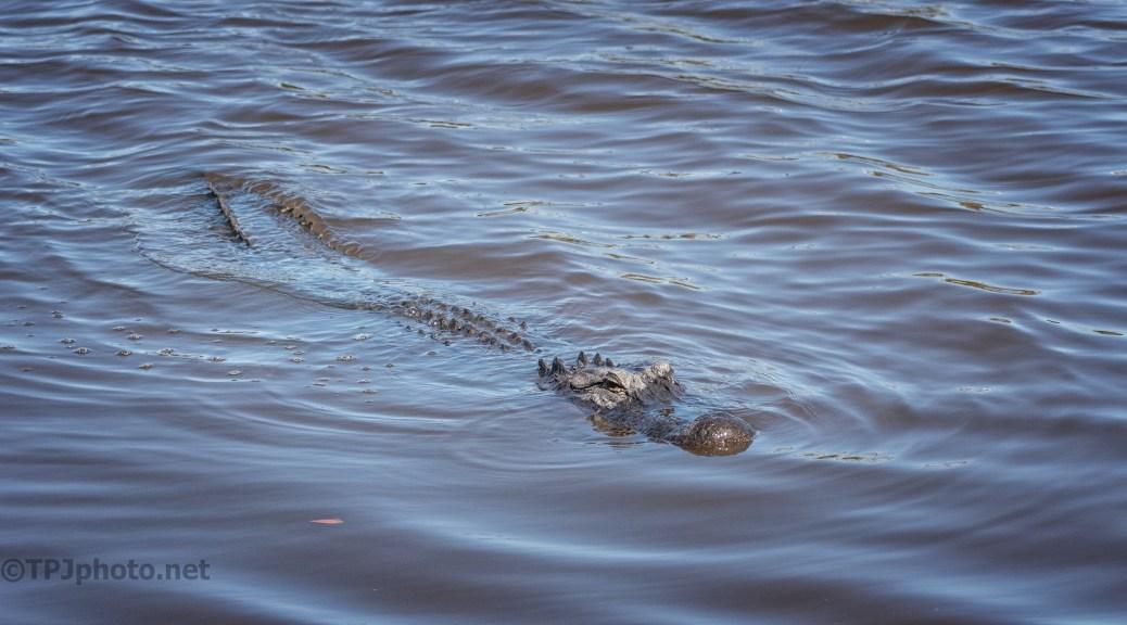 Effortless Swimming, Alligator