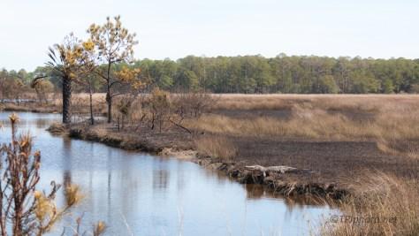 Burning, In A Marsh
