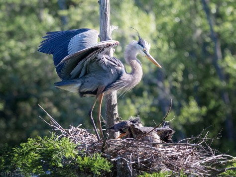 Showing How It's Done, Heron