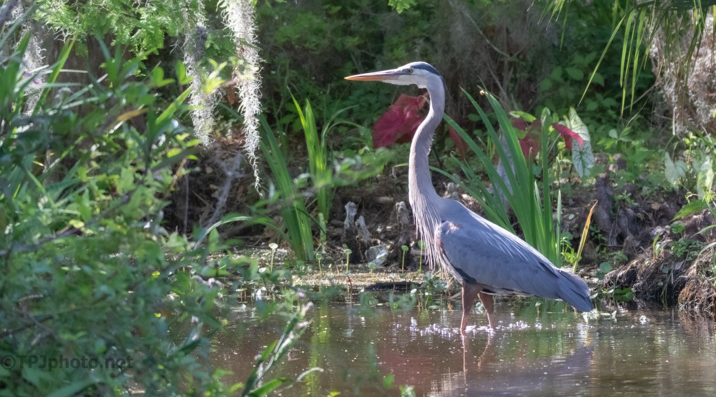 Adding Something Extra To A Pond, Heron
