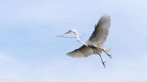 Perfect Sky For An Egret