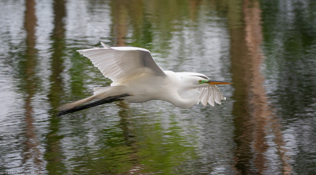 I Need To Pay Attention, Egret