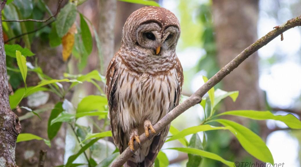 Always Something Special, Owl