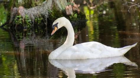 Getting The Look, Swan