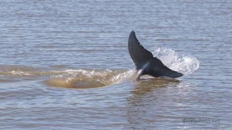 Strand Feeding Dolphins (2)