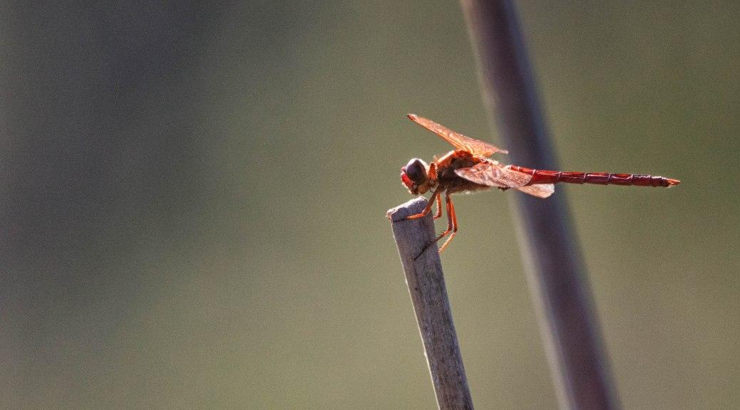 Bunch A Bugs