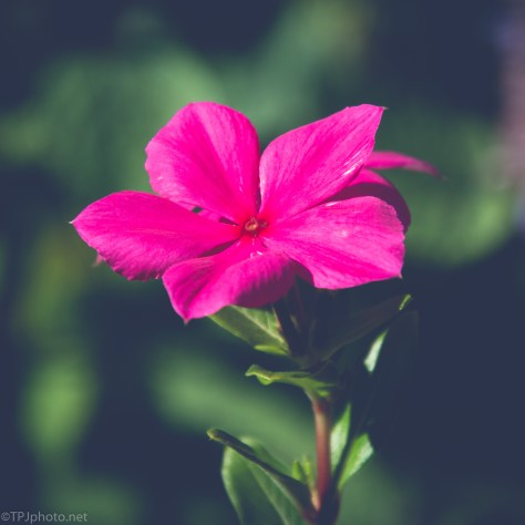 Flower In A Different Light