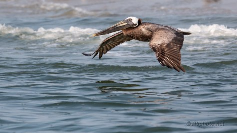 Low Fly By, Pelican