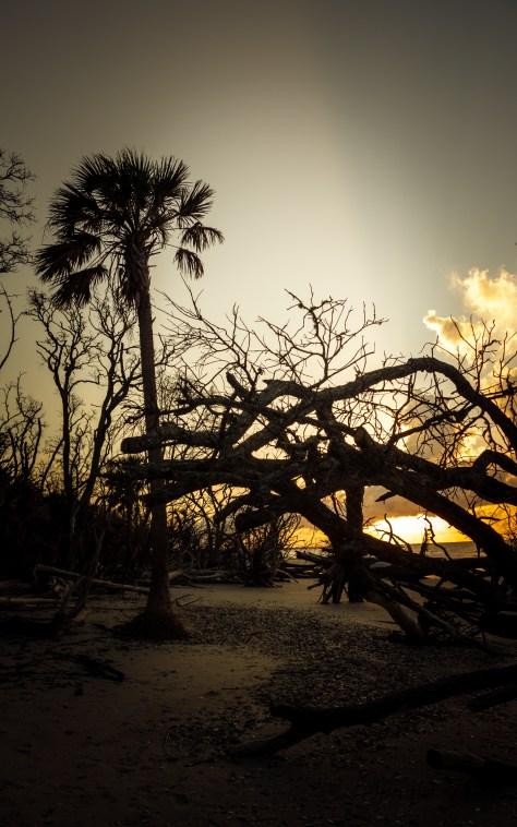 Along The Shore, Early Light