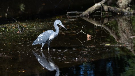 Almost Adult, Heron