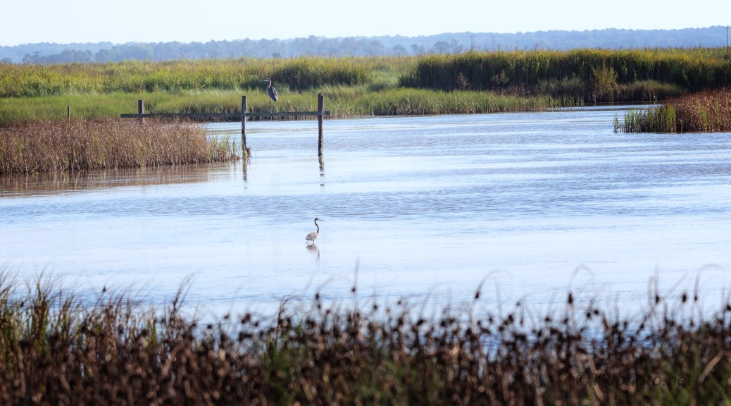 A Different Look At A Marsh