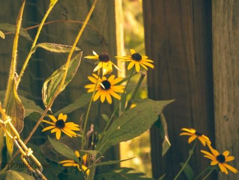 Soft Light, Flowers