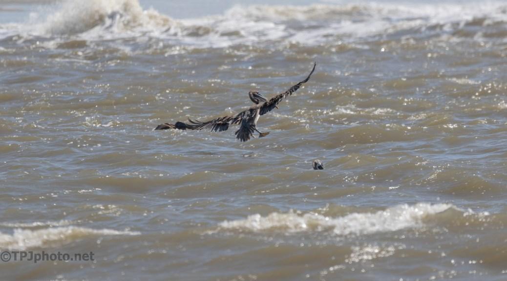 Rough Seas And Pelicans
