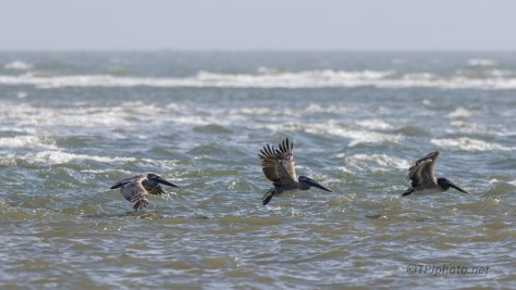 Through The Breech, Pelican