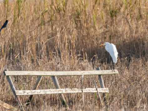 Book Ends, Heron And Egret