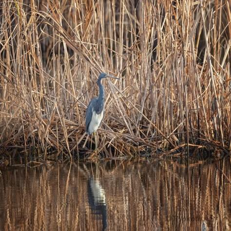 Like Hide And Seek, Heron (1)