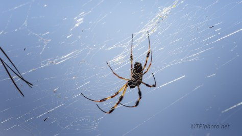 Still Out There, Orb Weaver