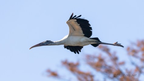 Wood Stork, New Location
