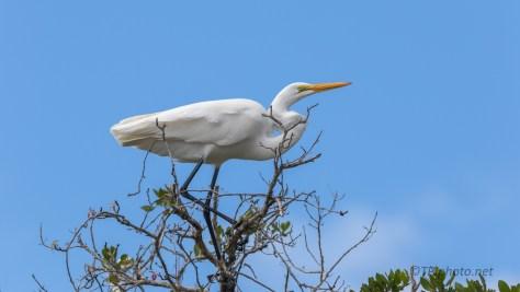 White On Blue, Egret