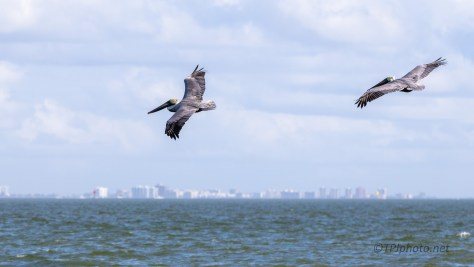 Just A Nice Scene, Pelican