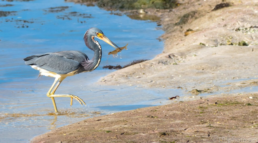 Grab And Go, Heron