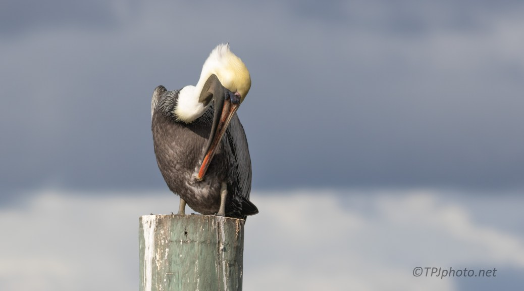 Pelican Liked This Spot