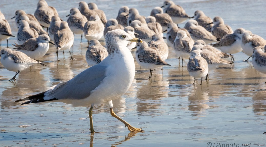 Get No Respect, A Gull