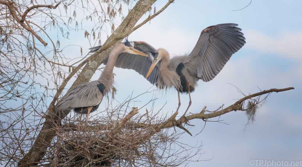 End Of The Day, Heron