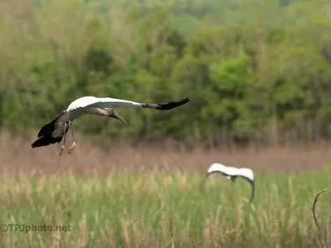 Sound Of Flight, Wood Storks